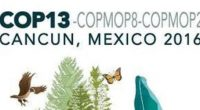 La 13ª reunión del Convenio sobre la Diversidad Biológica (CDB) de la ONU, se ha revisado los avances en la implementación de los compromisos clave de los más de 190 […]