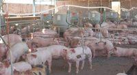 Las exportaciones de carne de porcino mexicana crecieron 9.5 por ciento en 2016, en comparación con el año anterior, como resultado de la política pública del Gobierno de la República […]