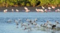 Se dio a conocer que la Secretaría de Medio Ambiente y Recursos Naturales (Semarnat) autorizó la construcción del proyecto hidroeléctrico Las Cruces en el río San Pedro Mezquital, Nayarit, cuyo […]