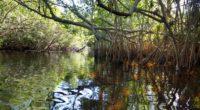 Con motivo del Día Mundial del Medio Ambiente, el Presidente de México, Enrique Peña Nieto, firmó diez decretos que establecen reservas de agua que garantizan la disponibilidad de este recurso […]
