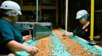 Cosechar almendras es un buen ejemplo de sostenibilidad alimentaria, informó la marca Almond Board of California, Estados Unidos, ya que este plantío garantiza la seguridad alimentaria a través de su […]