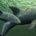 Durante una expedición de 11 días por el Alto Golfo de California, un grupo de científicos y expertos en mamíferos marinos, nacionales e internacionales, lograron avistar y documentar con fotografía […]
