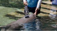La cadena mexicana de hábitats para la interacción con delfines fincada en el estado de Quintana Roo, en el caribe mexicano, Delphinus culminó su participación en la etapa de campo […]