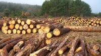 La organización Rainforest Alliance dio a conocer que el periodo 2000-2012, se ha presentado una gran expansión de la agricultura y de las plantaciones comerciales de madera destruyeron más de […]