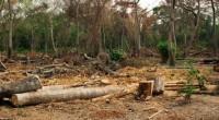 Mucho ruido y pocas nueces hay en el caso del combate a la tala clandestina en Milpa Alta, donde después de tres operativos y la intervención de casi 4 mil […]