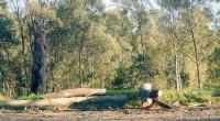 * Talan bosque en Huixquilucan * Responsable tiene demanda de despojo Huixquilucan, Méx.- Intensa tala de árboles de más de 20 metros de altura se efectúa en el paraje La […]