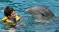 Los delfinarios fijos establecidos en México dieron a conocer su compromiso de apoyar a la Procuraduría Federal de Protección al Ambiente (PROFEPA) y a Convivencia Marina S.A. de C.V., a […]