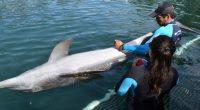 En días pasados, un grupo de investigadores del Centro de Conservación de Manatíes de la Universidad Interamericana en Puerto Rico arribaron a las instalaciones de Grupo Dolphin Discovery en […]