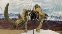 """""""Encuentro con Dinosaurios"""" es ya una realidad. El único museo itinerante llega a partir de este martes 23 de julio al Parque Bicentenario para ofrecer una experiencia única ya que […]"""