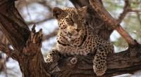 """En Papalote Museo del Niño se presenta la nueva película de la ADO Megapantalla IMAX, """"Kenia 3D Reino animal"""". Que invita a adentrarse en el corazón de África y descubrir […]"""