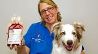 ¿Alguna vez se han puesto a pensar en qué pasa con los animales que son llevados a hospitales y necesitan algún tipo de intervención?, ¿cómo se les atiende?, ¿de dónde […]