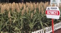 La empresa DuPont dio a conocer que al existir en México, caso el bajío una gran diversidad de cultivos; además de que las condiciones son propicias por su clima, tipo […]