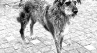 Ecatepec, Edomex.- Bajo el lema «La solución a la sobrepoblación de animales no es el sacrificio, sino evitar que se reproduzcan», Protectores Independientes de Ecatepec realizarán una jornada de […]