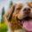 La alergia en los perros es una reacción del sistema inmunológico contra un «invasor» (o alérgeno), que puede ser cualquier componente que el organismo interprete como una agresión a él. […]
