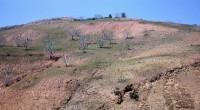 Dado que el suelo es un recurso limitado y está bajo presión creciente, por lo que actualmente 33 por ciento del mismo a nivel mundial se encuentra degradado, lo que […]