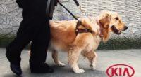 La empresa automotriz KIA Motors México anunció una alianza con la Escuela para Entrenamiento de Perros Guía para Ciegos, ubicada en la Ciudad de México, en la que se promueve […]