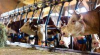 Con el fin de alcanzar en un futuro cercano una ganadería mexicana más sustentable, en la que se produzcan alimentos de origen animal de buena calidad y sean amigables con […]