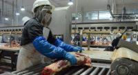 La Secretaría de Agricultura, Ganadería, Desarrollo Rural, Pesca y Alimentación (SAGARPA) informó que al tercer trimestre de 2016 las exportaciones agroalimentarias a Japón alcanzaron los 778 millones de dólares, lo […]