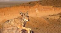 La Reserva de la Biosfera El Pinacate y Gran Desierto de Altar, localizada en el estado de Sonora, fue designada hoy Patrimonio Mundial, por la Organización de las Naciones Unidas […]