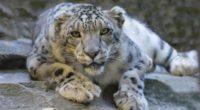 Tras la noticia que un felino silvestre estaba libre en las comunidades de Cerro Gordo y Emiliano Zapata de Valle de Bravo en el Estado de México y que […]