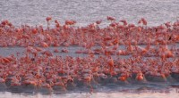Se dio a conocer que la Comisión Nacional de Áreas Naturales Protegidas (Conanp), a través de las Reservas de la Biosfera Ría Lagartos, Los Petenes y Ría Celestún, ubicada en […]