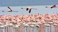 En el Marco de conservación del Flamenco Rosado, desde hace más de 15 años, la Comisión Nacional de Áreas Naturales Protegidas (Conanp), en coordinación con la Fundación Pedro y Elena […]