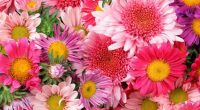 POR: Luis Enrique Velasco Aunque la floricultura mexicana es un excelente negocio que florece y crece año con año, no es una actividad que se pueda incluir, aún, en la […]