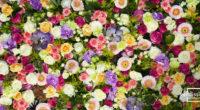 Xochitla Parque Ecológico realizará el 27 y 28 de julio su evento ambiental más importante del año, La Feria de las Flores 2019. En su quinta edición, niños, jóvenes y […]
