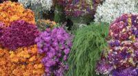 Durante la madrugada, cuando la mayor parte de los habitantes de la Ciudad de México aún se encuentran en los brazos de Morfeo, el sector de Flores y Hortalizas de […]