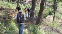 La Comisión Nacional Forestal informó que tres Unidades Productoras de Germoplasma Forestal (UPGF), que son apoyadas por la CONAFOR, fueron certificadas por la Asociación de Normalización y Certificación A.C. (ANCE), […]