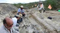 Durante las dos últimas décadas, México ha registrado un repunte importante en el descubrimiento y estudio de dinosaurios; sin embargo, se carecía de una obra bibliográfica que ofreciera un panorama […]
