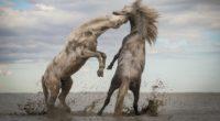 La organización ambiental global The Nature Conservancy (TNC) dio a conocer a los ganadores de su Concurso de Fotografía 2018. Seleccionada entre más de 50 mil fotos, la toma de […]