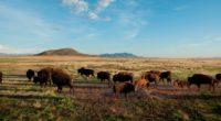 The Nature Conservancy México (TNC) anunció la donación a Fondo Mexicano para la Conservación de la Naturaleza, A.C. (FMCN) del Rancho El Uno, ubicado dentro de la Reserva de la […]