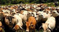 La ganadería, el consumo de carne y lácteos es uno de los mayores generadores de emisiones de dióxido de carbono (CO2) a nivel global, abarcando el 14.5% a nivel global, […]