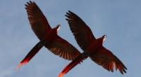 En la Reserva Ecológica Nanciyaga, ubicada dentro de la Reserva de la Biosfera Los Tuxtlas, en el estado de Veracruz, en el Golfo de México, se realizó la tercera liberación […]