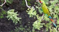 En el marco de la COP 13, se entregó el reconocimiento a la Conservación de la Naturaleza, a la organización VIDAS A.C., que desde 2009 ha desarrollado el Programa de […]