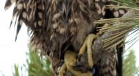 Con la finalidad de impulsar el respeto, cuidado y conservación del capital natural de la entidad federativa, es decir, la biodiversidad y, en especial, las diversas especies de aves, […]