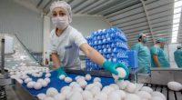 Se dio a conocer que la producción de carne de pollo en México para este 2016 alcance alrededor de las tres millones 51 mil 843 toneladas en el país, así […]