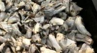 Fidel Guevara Lara, profesor investigador del Departamento de Química de la Universidad Autónoma del estado de Aguascalientes (UAA), se ha dedicado a estudiar las propiedades del hongo llamado coloquialmente huitlacoche […]