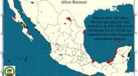 México tiene actualmente 142 sitios designados como Humedales de Importancia Internacional (sitios Ramsar), que suman una superficie de 8 millones 657 mil 57 hectáreas. Tener sitios con esta catalogación obliga […]