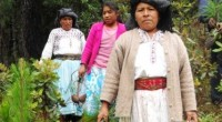 Se estima que el 82% de las 155 mil hectáreas deforestadas cada año en el territorio mexicano son consecuencia del cambio de uso de suelo con diversos fines como es […]