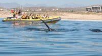 En esta temporada vacacional de Semana Santa, la Comisión Nacional de Áreas Naturales Protegidas (CONANP), da a conocer las medidas de seguridad y atención al turismo nacional e internacional, que […]