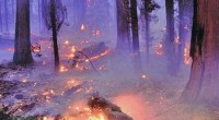 Metepec, Méx.- Jorge Rescala Pérez,director general de la Protectora deBosques del Estado de México(Probosque), convocó a la ciudadanía atomar conciencia que cualquier descuidoen el bosque puede originar fuego deconsecuencias […]