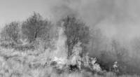 La Ciudad de México, una de las metrópolis más grandes del mundo, registró un fuerte incendio en sus pocas áreas forestales que aún conserva. La conflagración afectó a más de […]