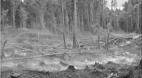 El secretario de Medio Ambiente (Semarnat), Juan Rafael Elvira Quesada, hizo un balance en materia de incendios forestales en el país. Hasta la fecha, son 4 mil 269 siniestros con […]
