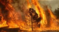 De acuerdo al gobierno mexicano se estima que en el 2013 los incendios forestales se presentaron en un 99% por causas atribuibles a la mano del hombre. Se informó que […]