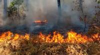Este año, el número de incendios forestales en México fue menor, debido a las lluvias y a que mejoró la capacidad de repuesta y combate, tanto del personal del gobierno […]