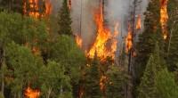 Dado que el 2013 fue el tercer año más lluvioso desde 1970, lo que provocó gran producción de material combustible en campos, selvas y bosques, aunado a que México tendrá […]