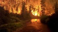 En información proporcionada a Mi Ambiente, por parte de brigadistas que combaten el fuego por parte de la Comisión Nacional Forestal (CONAFOR), quienes pidieron guardar el anonimato se quejaron que, […]