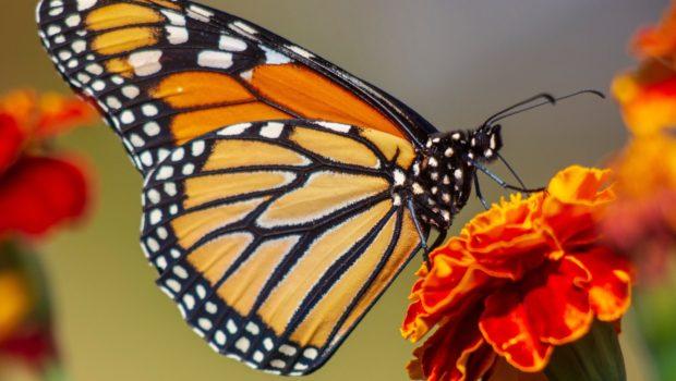 Air Wick Aceites Esenciales une esfuerzos con WWF México para emprender un proyecto de reforestación y preservación de los ecosistemas donde migra e hiberna la mariposa Monarca, una de las […]